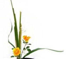 ikebana-FullSizeRender-27-12-18-01-28